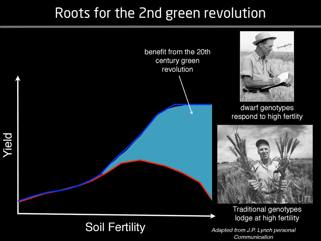 Soil Fertility Yield Traditional genotypes lodg...