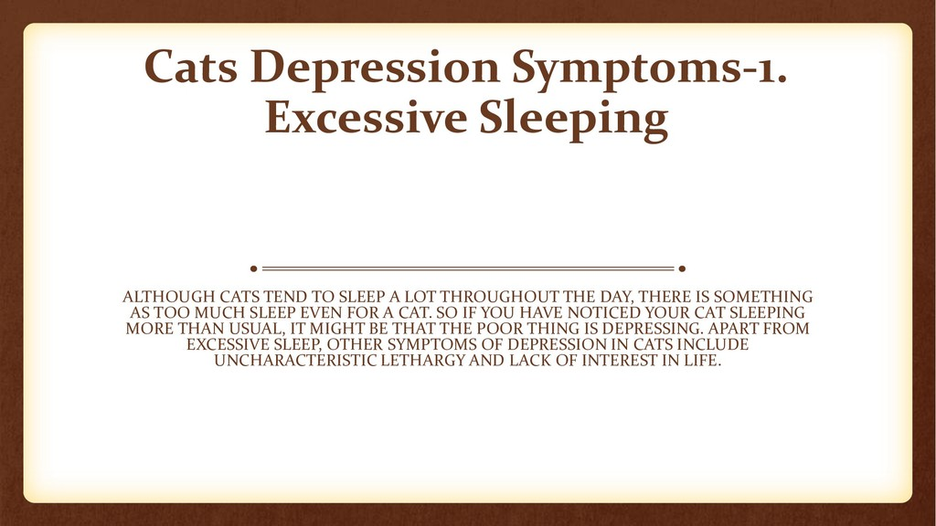 Cats Depression Symptoms-1. Excessive Sleeping ...