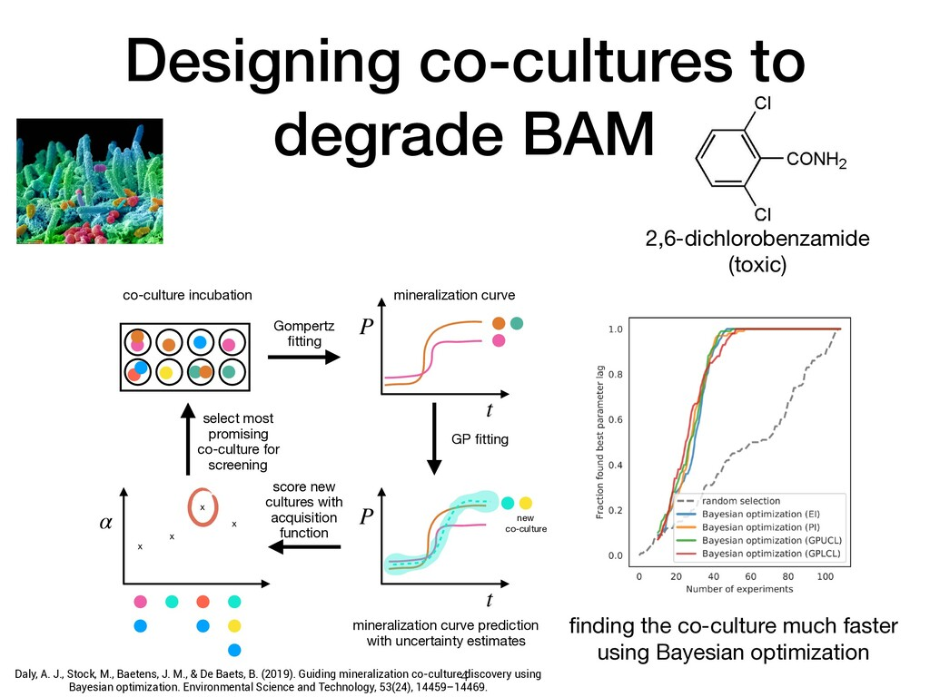 Designing co-cultures to degrade BAM t P t P co...