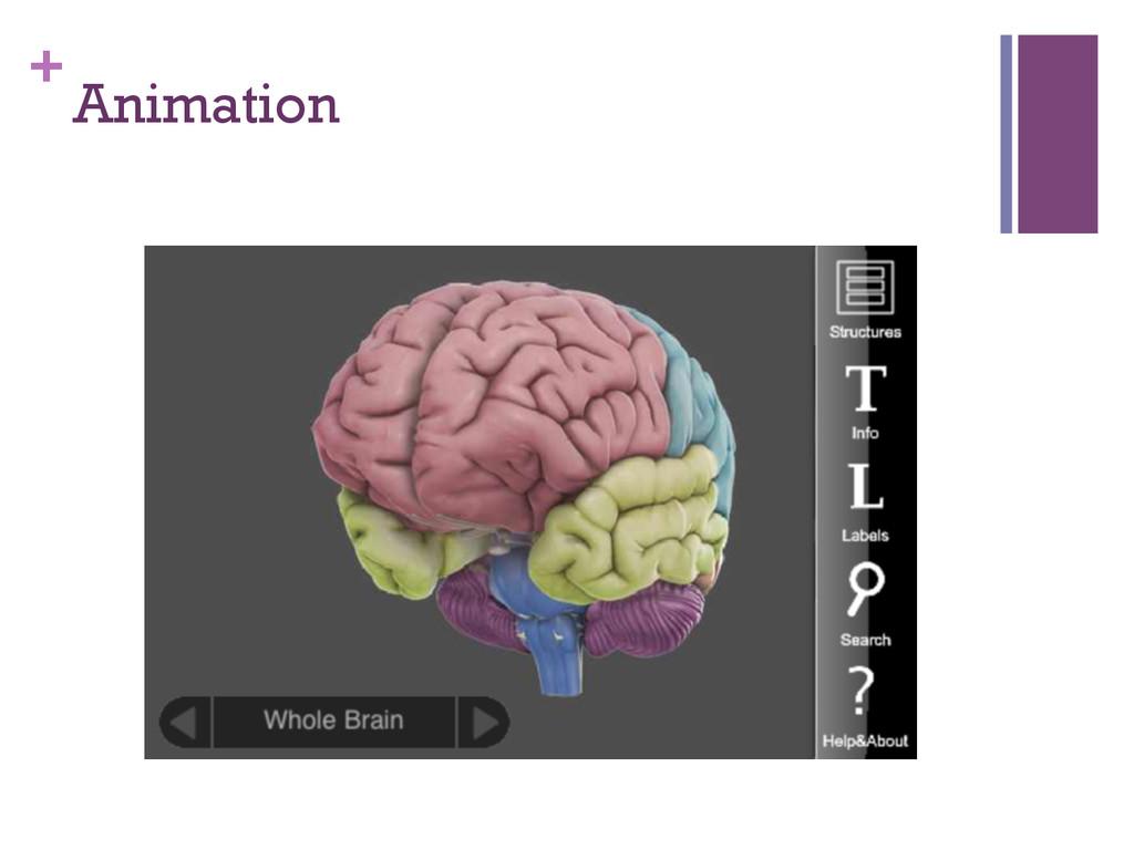 + Animation
