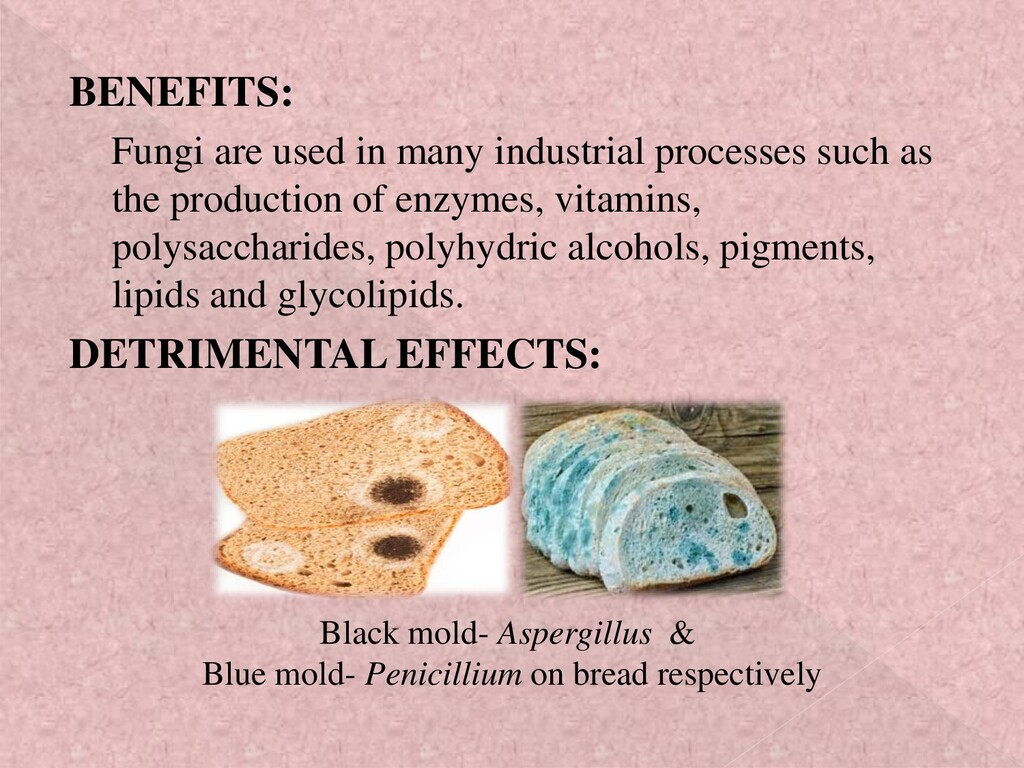 BENEFITS: Fungi are used in many industrial pro...