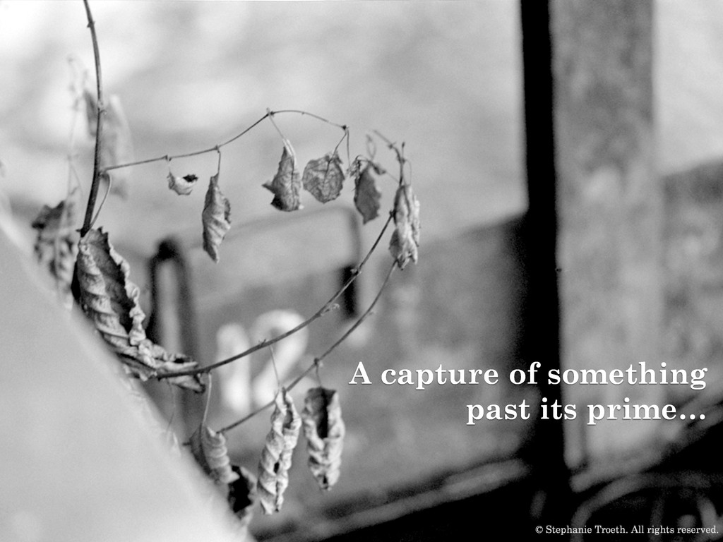 A capture of something past its prime… © Stepha...