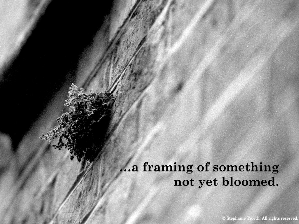 …a framing of something not yet bloomed. © Step...