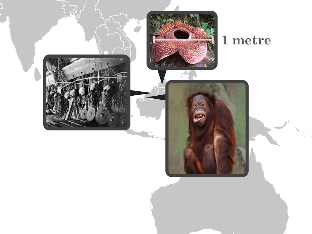1 metre