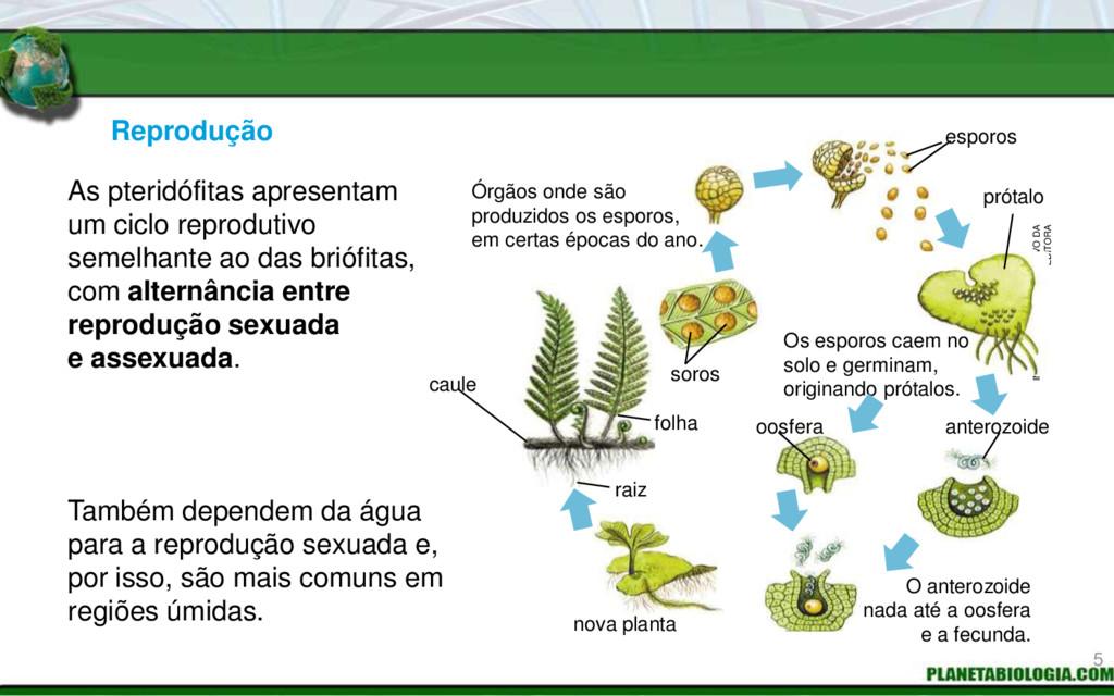 Reprodução Também dependem da água para a repro...