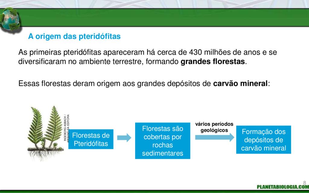 A origem das pteridófitas Florestas são coberta...
