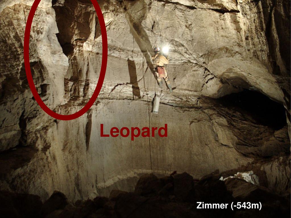 Zimmer (-543m) Leopard