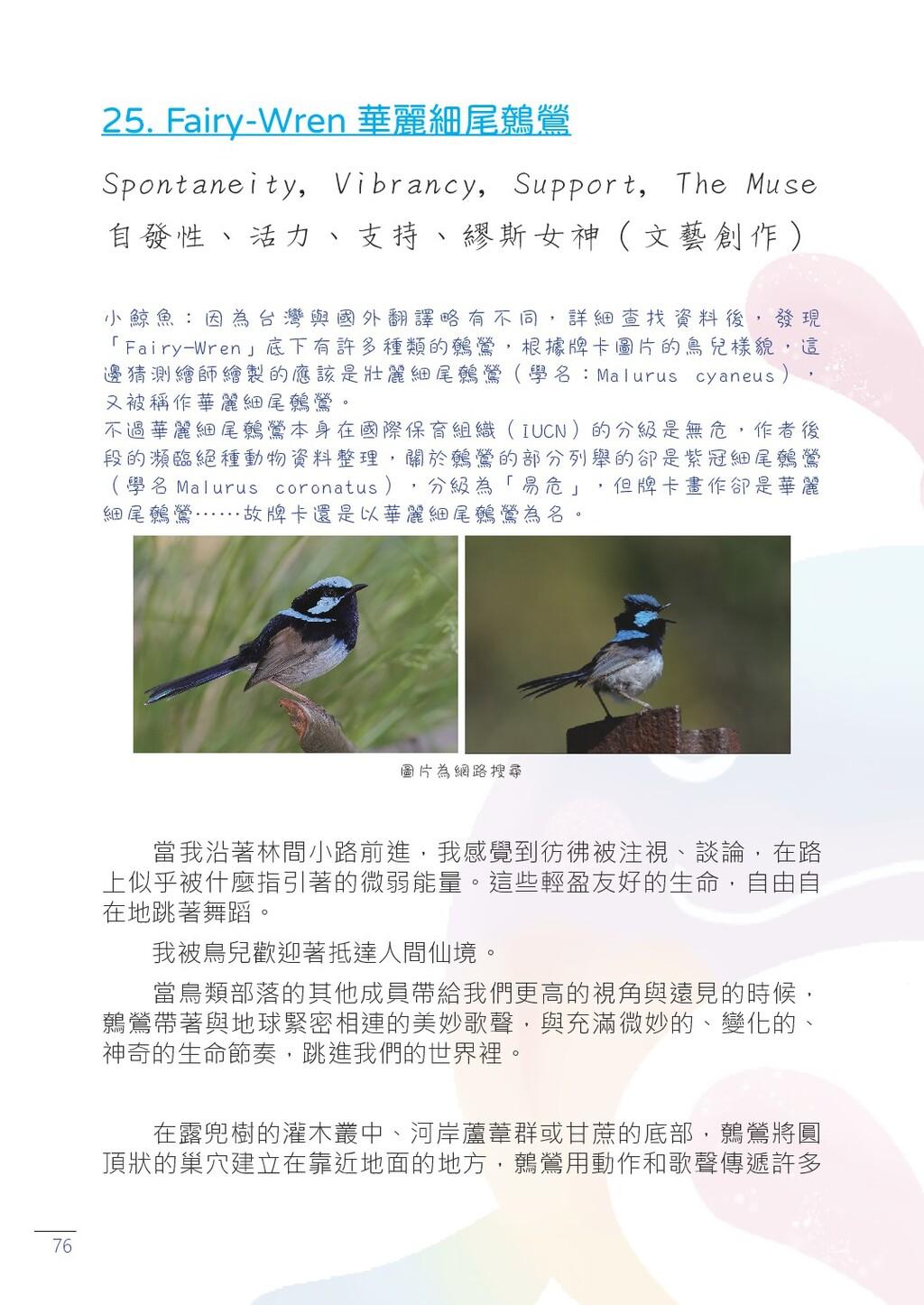 76 25. Fairy-Wren 華麗細尾鷯鶯 Spontaneity, Vibrancy,...