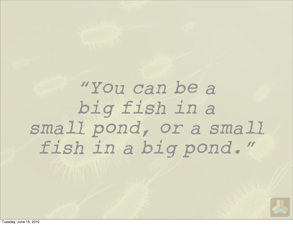 """You can be a big fish in a sma pond, or a sma ..."