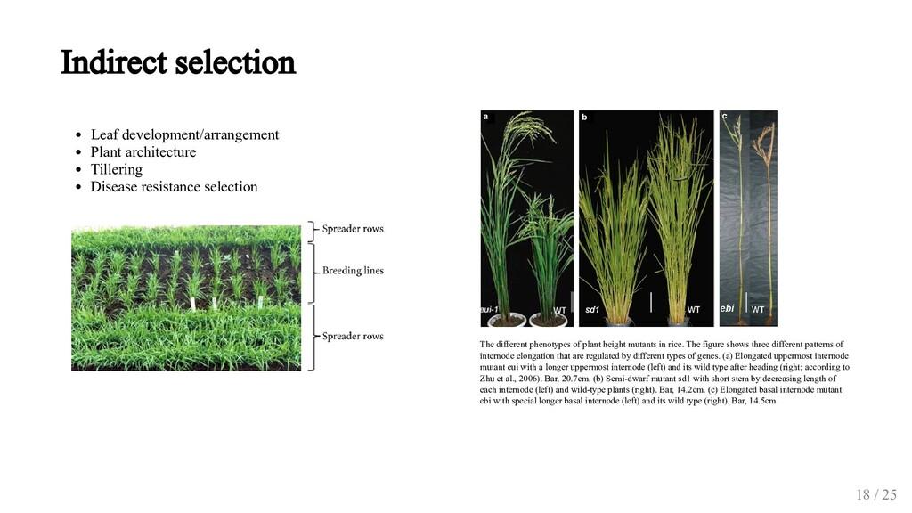 Leaf development/arrangement Plant architecture...
