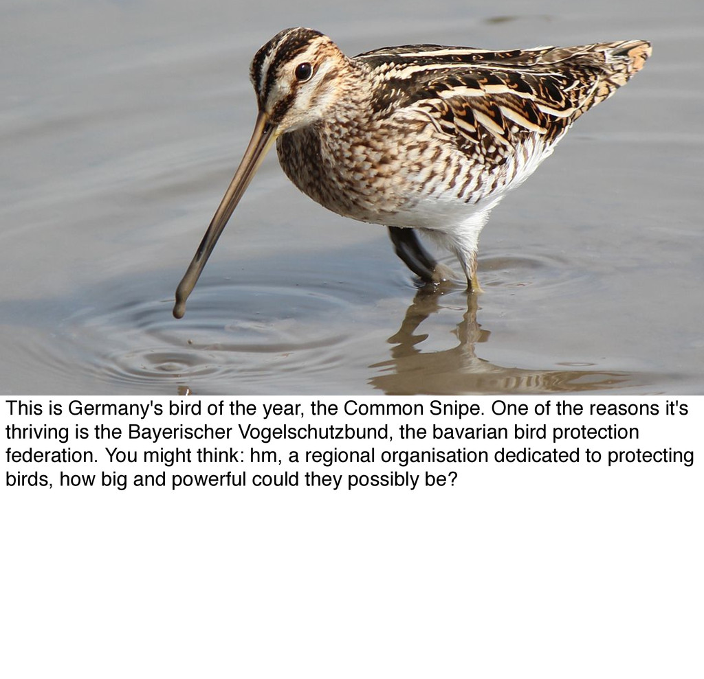 This is Germany's bird of the year, the Common ...