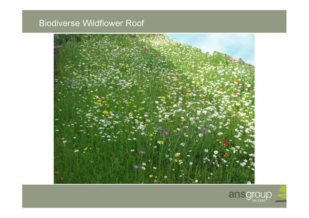 Biodiverse Wildflower Roof