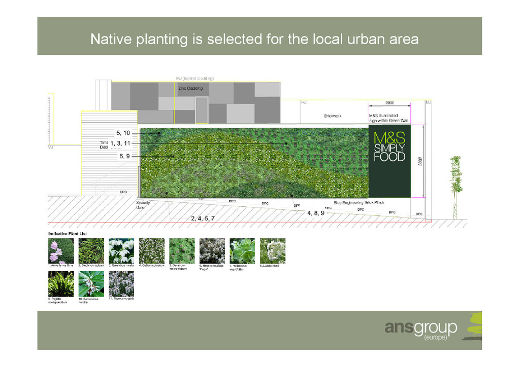 Native planting is selected for the local urban...
