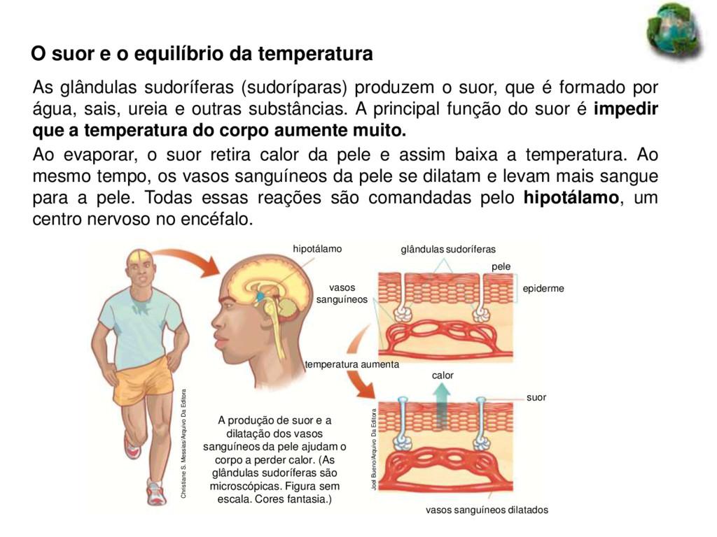 O suor e o equilíbrio da temperatura Christiane...