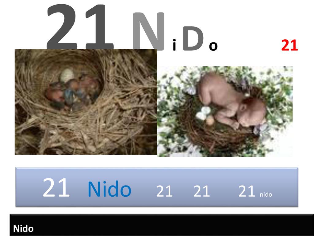 21 Nido 21 21 21 nido 21 N i Do 21 Nido