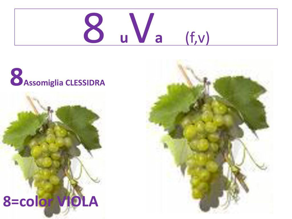 8 u Va (f,v) 8 Assomiglia CLESSIDRA 8=color VIO...