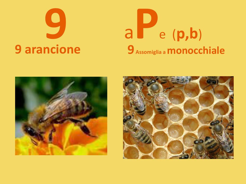 9 a P e (p,b) 9 arancione 9Assomiglia a monocch...