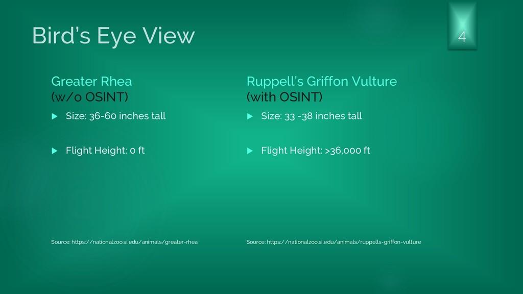 Bird's Eye View Greater Rhea (w/o OSINT)  Size...