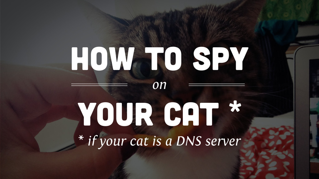 your cat * how to spy on * if your cat is a DNS...