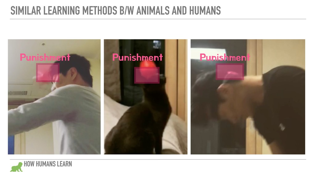SIMILAR LEARNING METHODS B/W ANIMALS AND HUMANS...