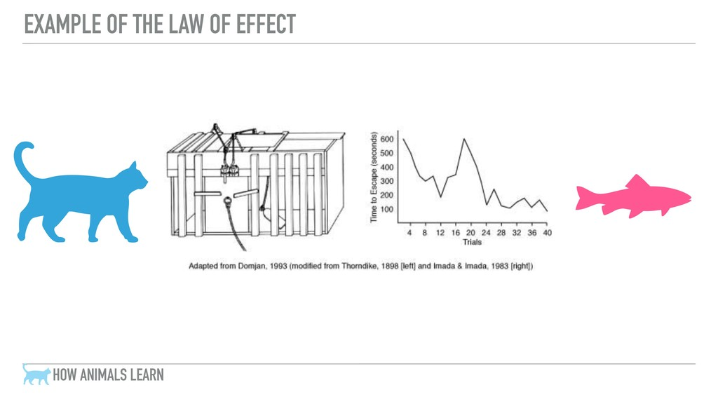 EXAMPLE OF THE LAW OF EFFECT HOW ANIMALS LEARN