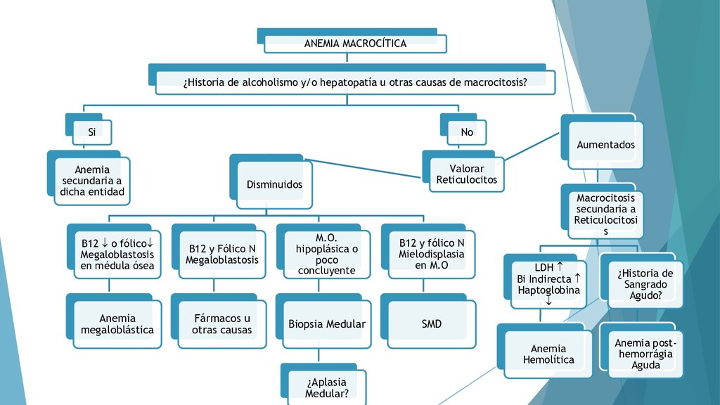 49 ANEMIA MACROCÍTICA ¿Historia de alcoholismo ...