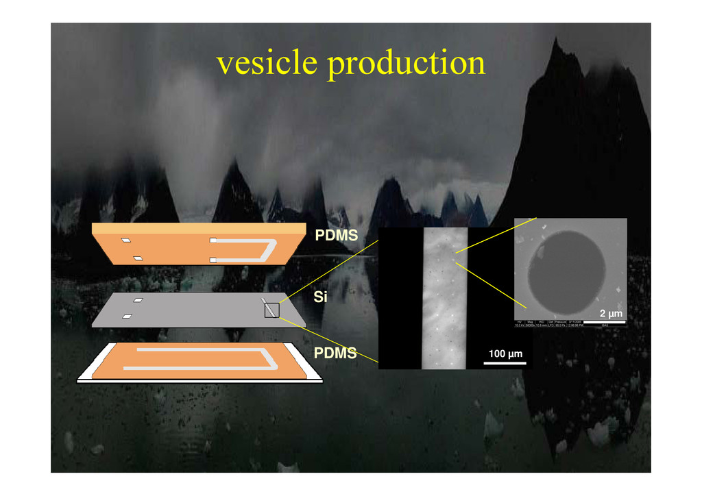 vesicle production p PDMS Si PDMS 100 µm 2 µm
