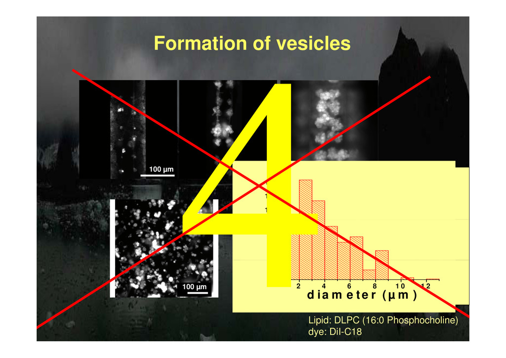 Formation of vesicles 100 µm 100 µm 100 µm 1 0 ...