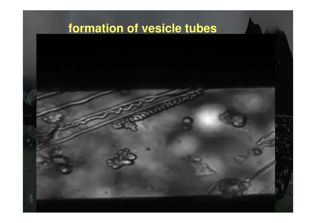 formation of vesicle tubes