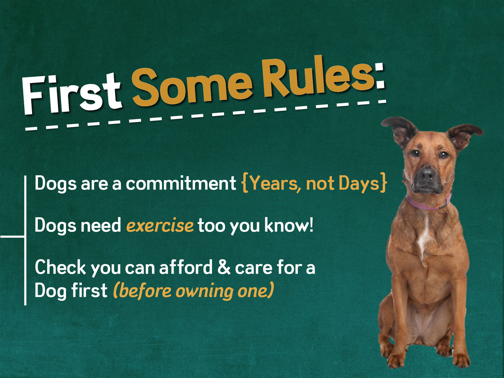 First Some Rules: Dogs are a commitment {Years,...