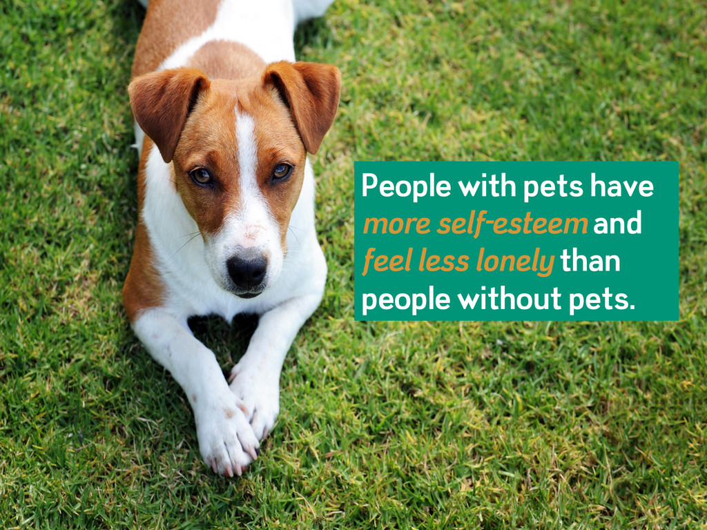 People with pets have more self-esteem and feel...