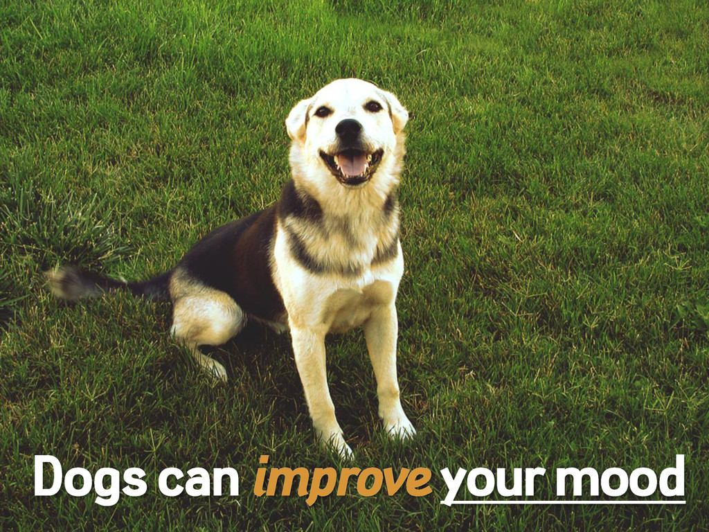 Dogs can improve your mood