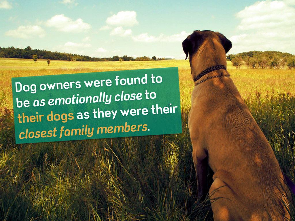 Dog owners were found to be as emotionally clos...