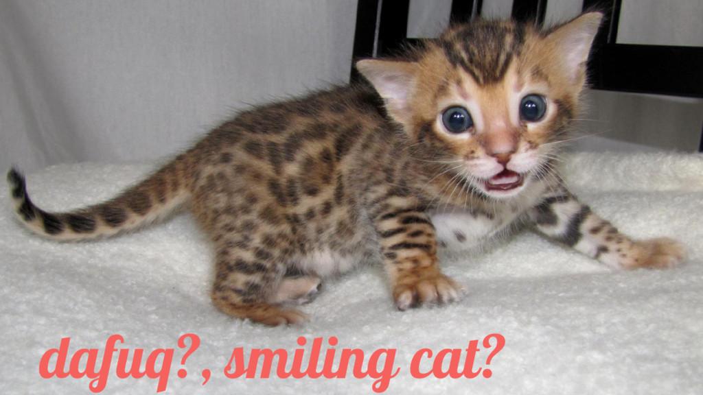 dafuq?, smiling cat?