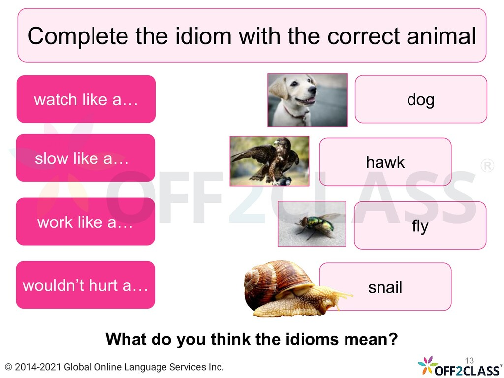 Complete the idiom with the correct animal slow...