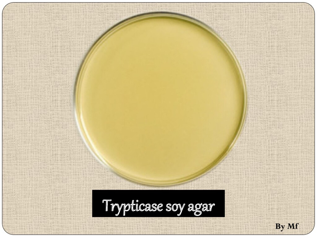Trypticase soy agar By Mf