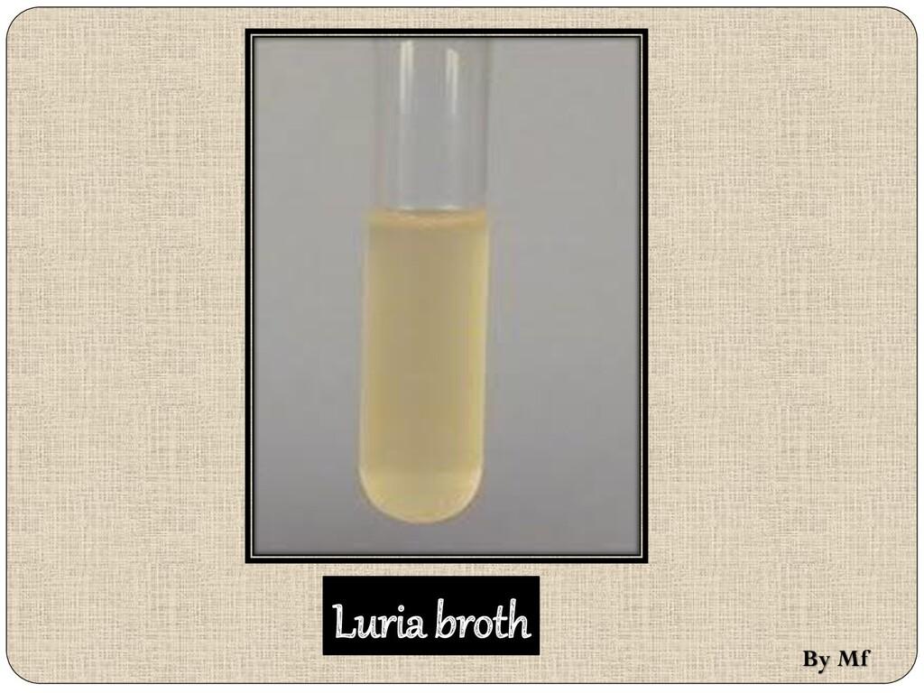 Luria broth By Mf