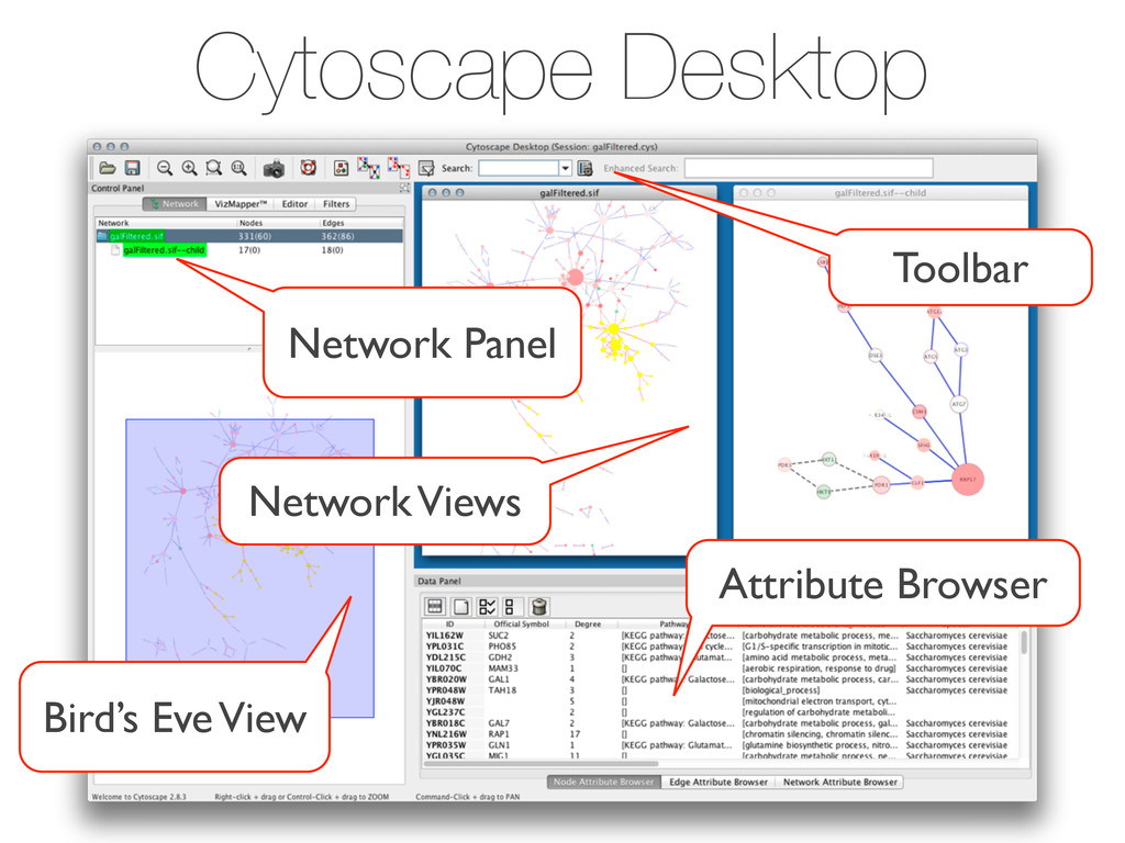 Cytoscape Desktop Toolbar Network Panel Bird's ...