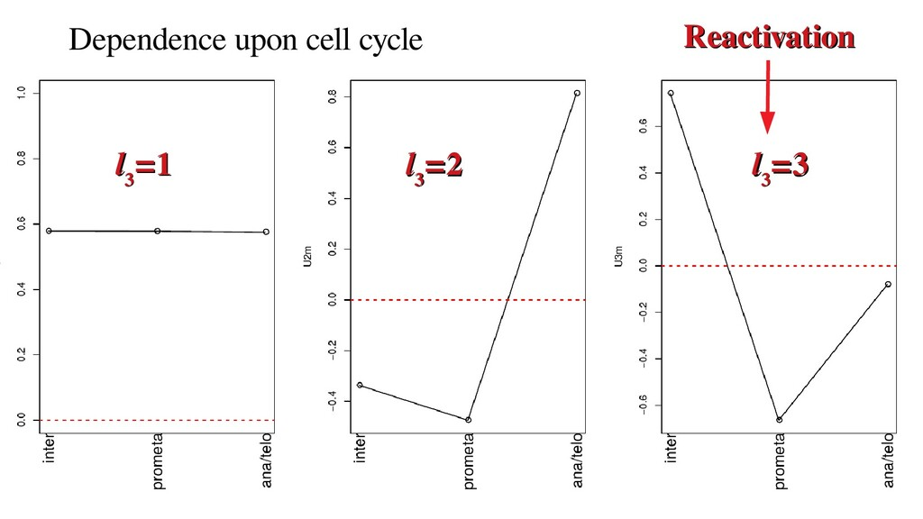 Dependence upon cell cycle Reactivation Reactiv...