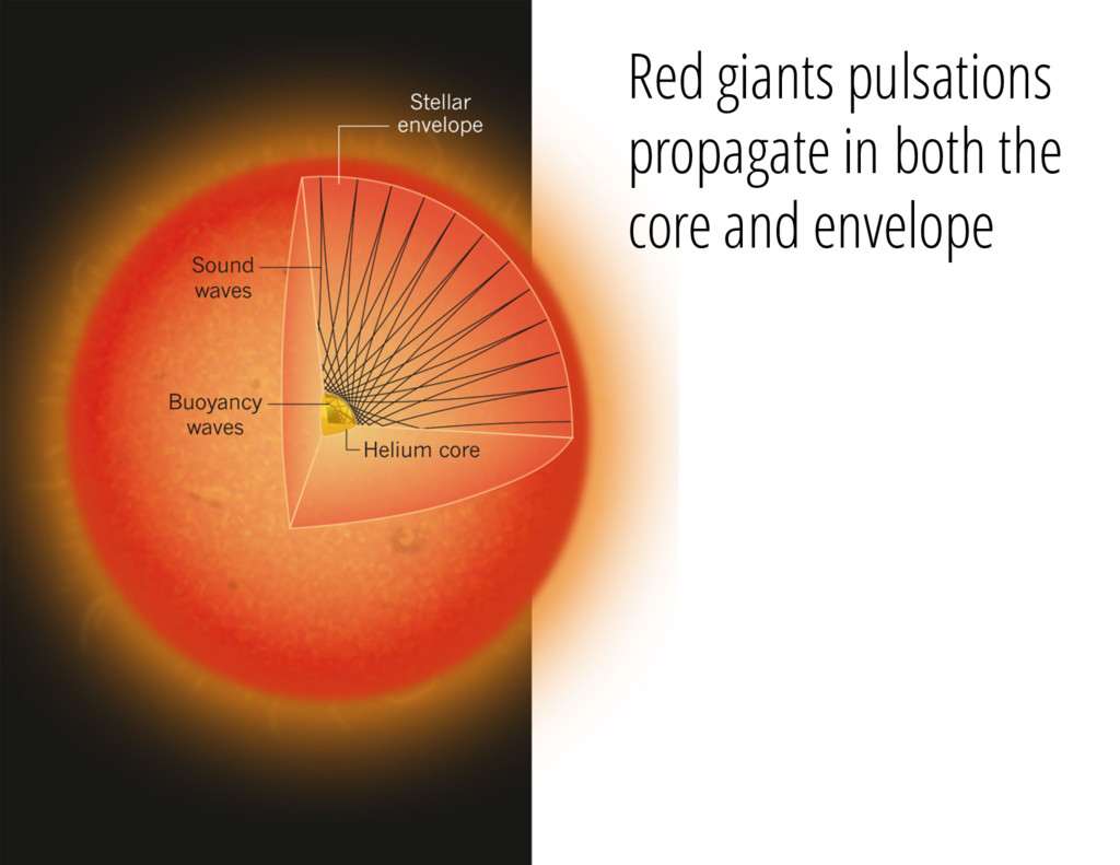 Red giants pulsations propagate in both the cor...