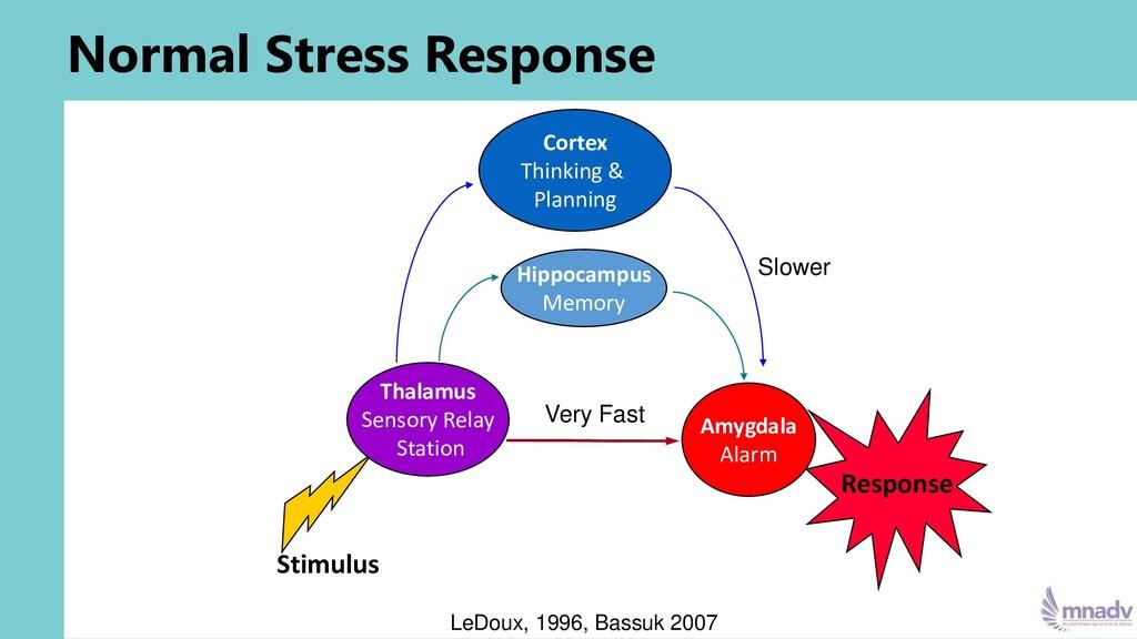 Normal Stress Response Stimulus Thalamus Sensor...