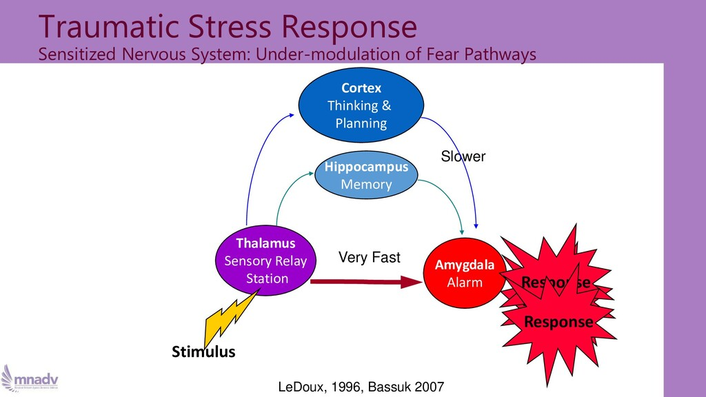 Traumatic Stress Response Sensitized Nervous Sy...