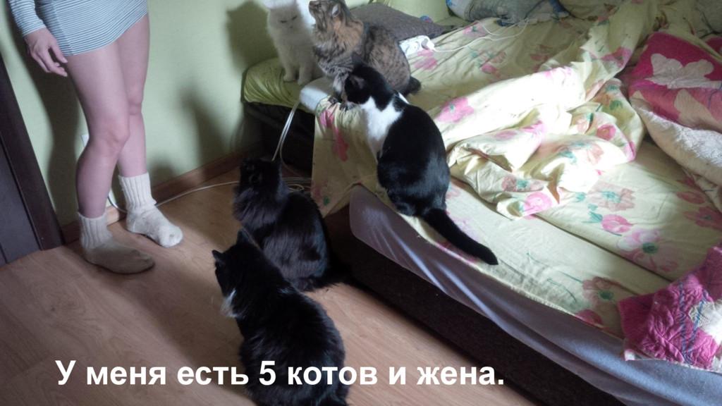У меня есть 5 котов и жена.