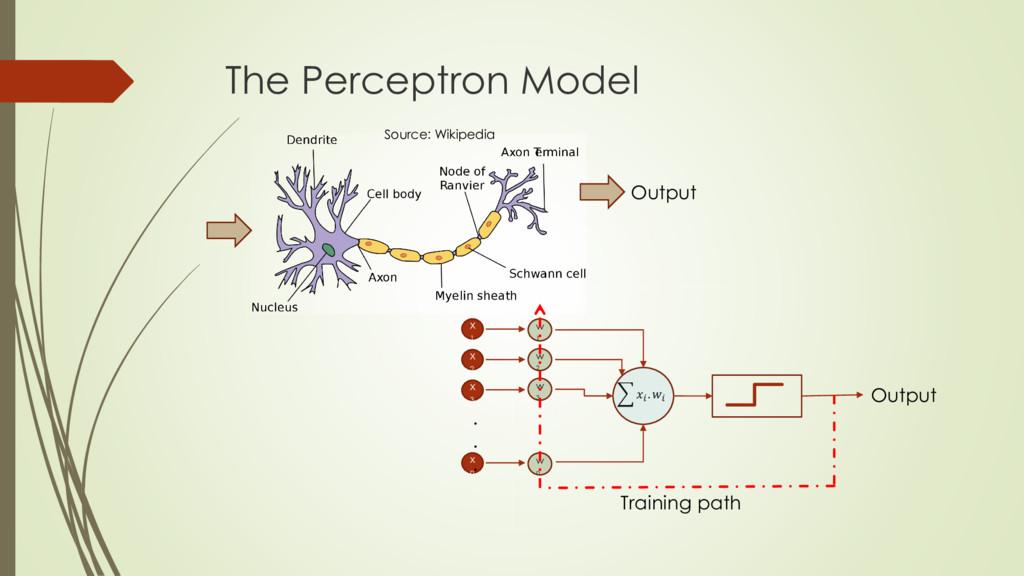 The Perceptron Model Output Source: Wikipedia x...