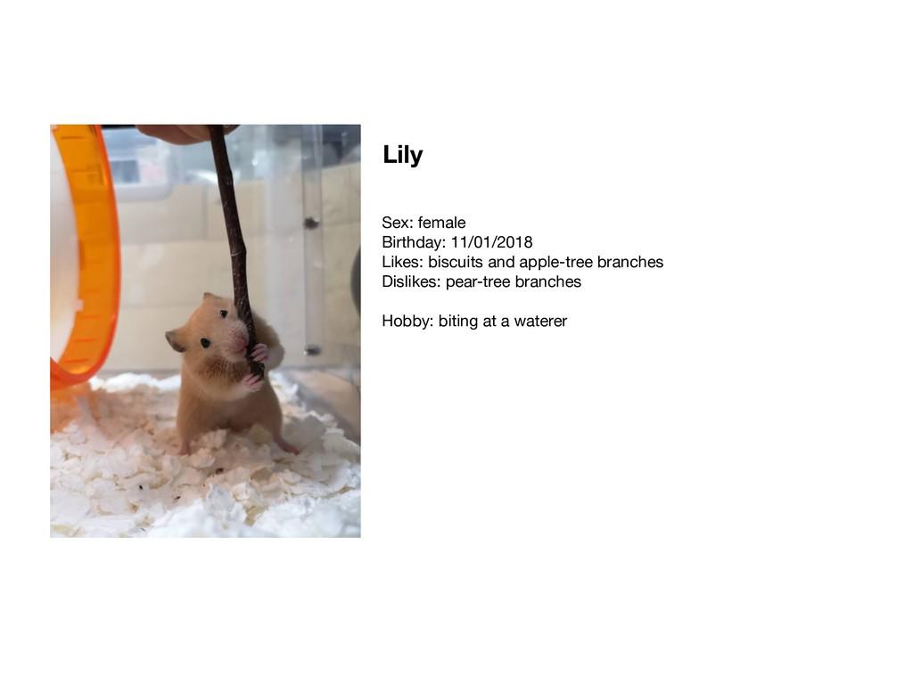 Lily Sex: female  Birthday: 11/01/2018  Likes: ...