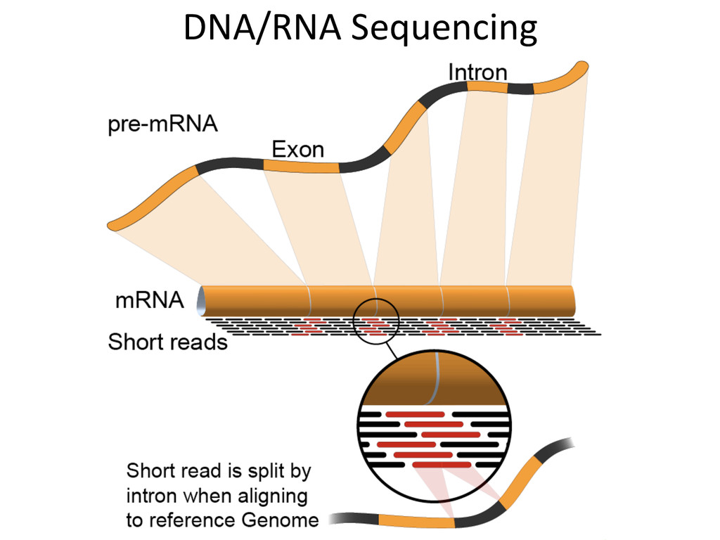 DNA/RNA	