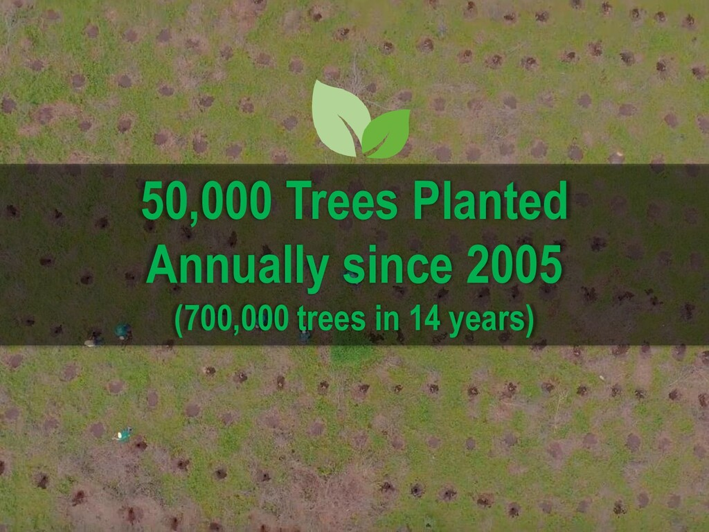 50,000 Trees Planted Annually since 2005 (700,0...
