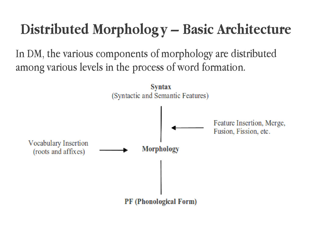 Distributed Morphology – Basic Architecture In ...
