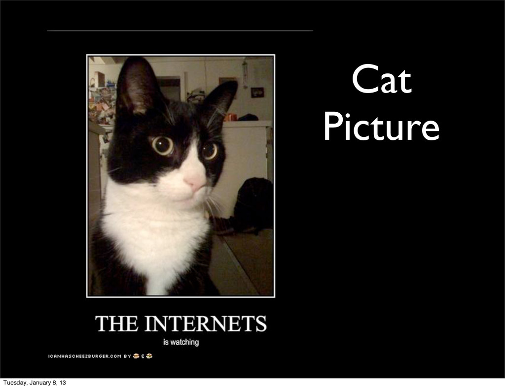 Cat Picture Tuesday, January 8, 13