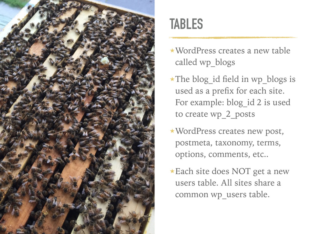 TABLES ★WordPress creates a new table called wp...